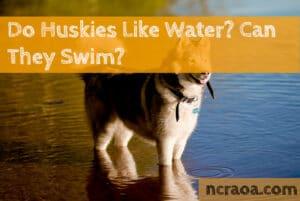 huskies like water