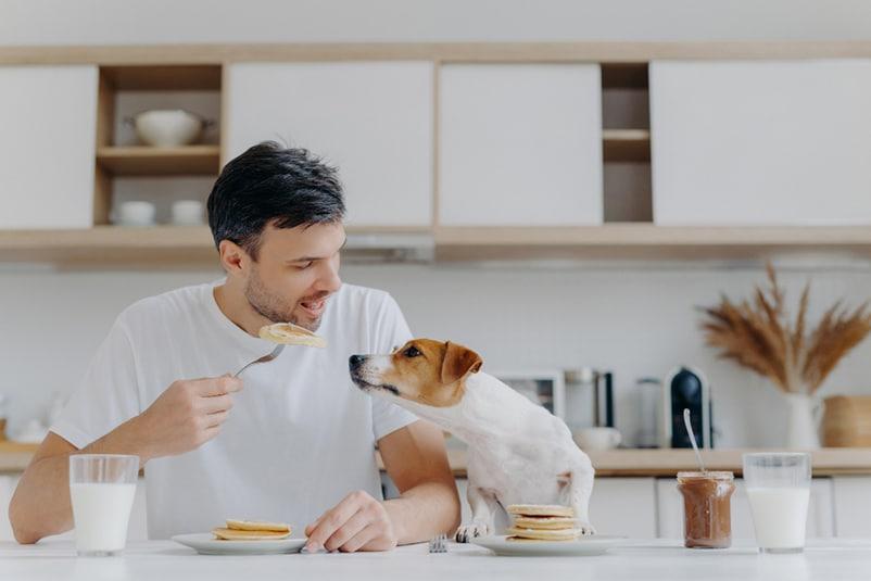 dog eating pancakes