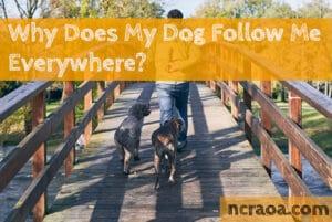my dog follows me everywhere