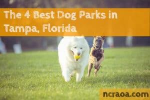 tampa dog parks
