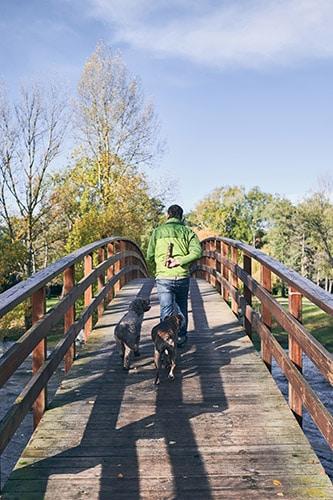 dogs following man on bridge