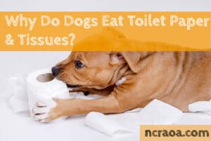 why dogs eat toilet paper