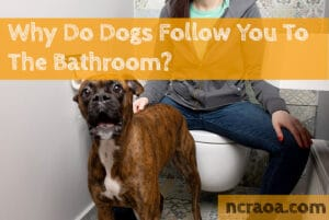 why dogs follow you to the bathroom