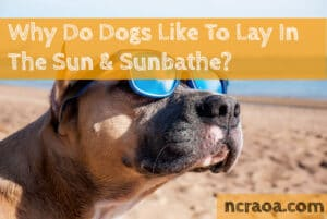 why dogs like laying in sun