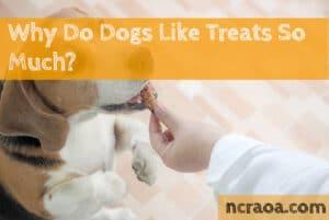 why dogs like treats