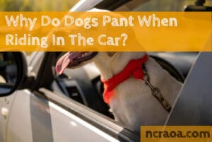 why dogs pant in car