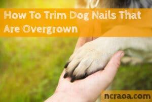 trim overgrown dog nails