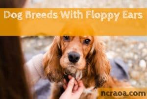 dog breeds floppy ears