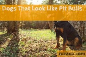 dog breeds look like pit bulls
