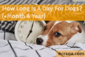 how long is a day for dogs