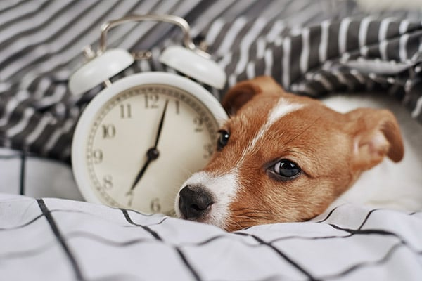 how long is time for dogs